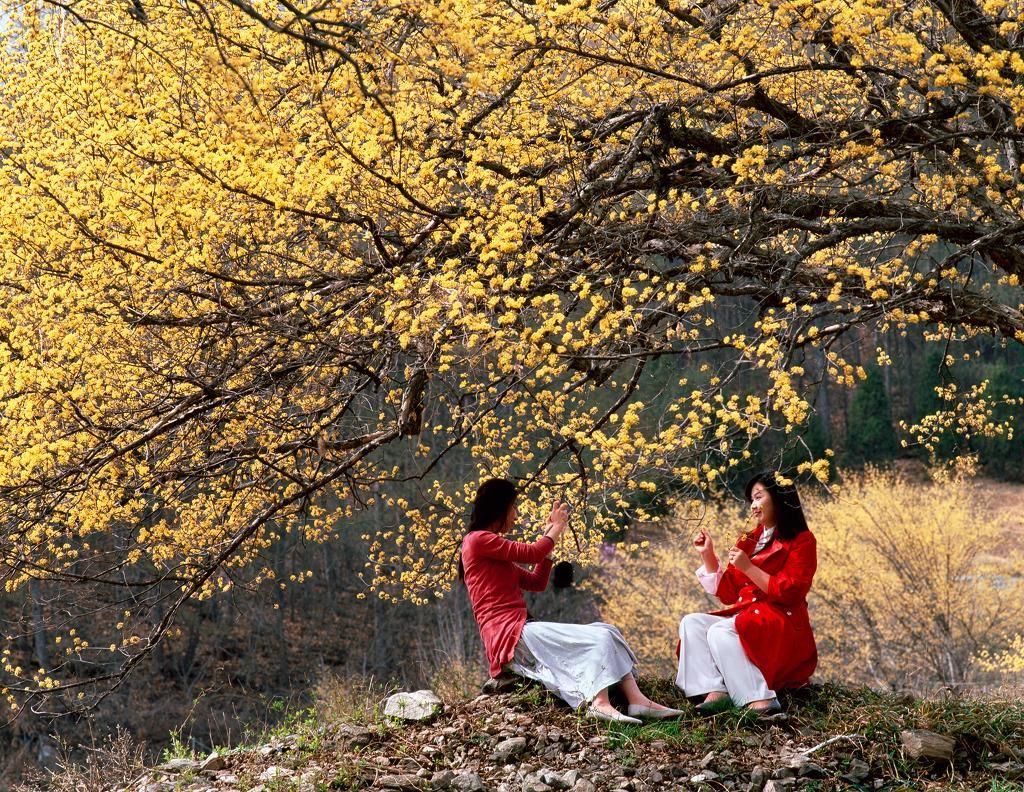 Thaophuongnguyen-172410092445-hoa-hq1