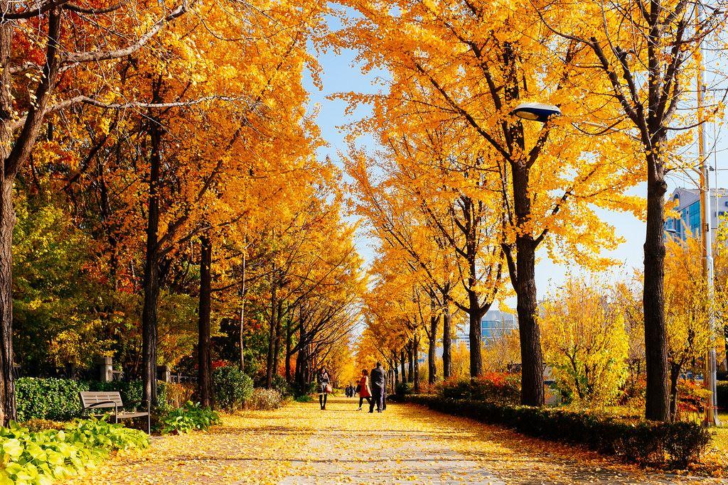 Hàn-Quốc-Mùa-lá-vàng